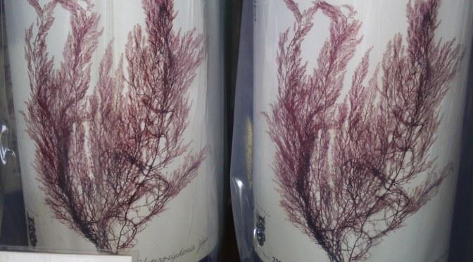 静岡県地酒:高島酒造・白隠政宗山廃純米ひやおろし原酒